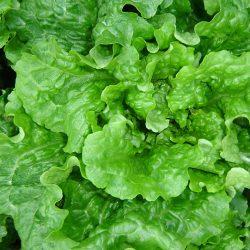 салати гриин смайл